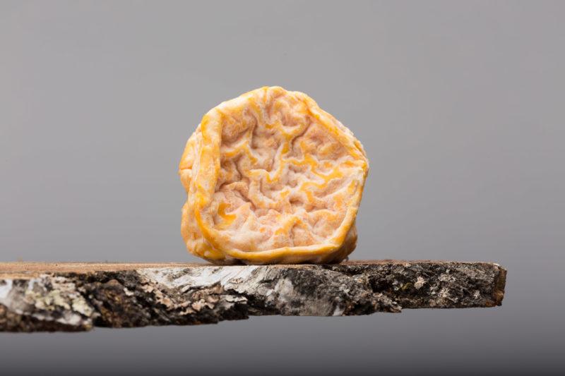 Le Saint Front, un fromage haut en couleur, en odeur et en saveur